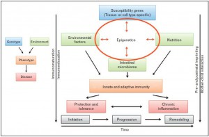 Model IBD pathogenesis in which epigenetics plays a central role in mediating effects of the key cornerstones: genetic predisposition, environmental factors, nutrition and the intestinal microbiome (Jenke and Zilbauer, 2013).